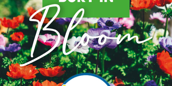 Bury in Bloom 2020 reveals some hidden gems.